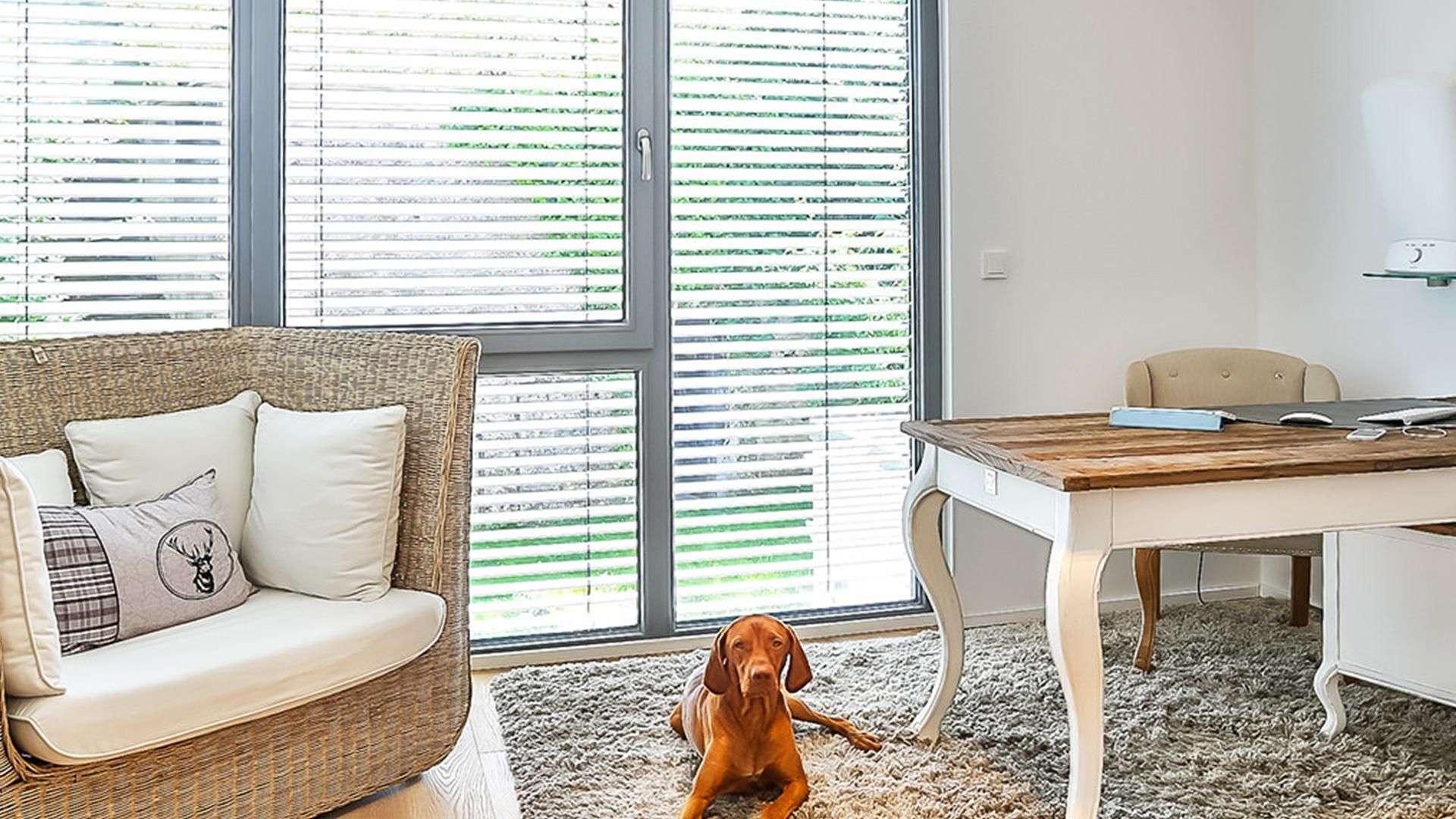 Raum mit Sessel, Tisch, Hund und großen Fenstern mit Rollos