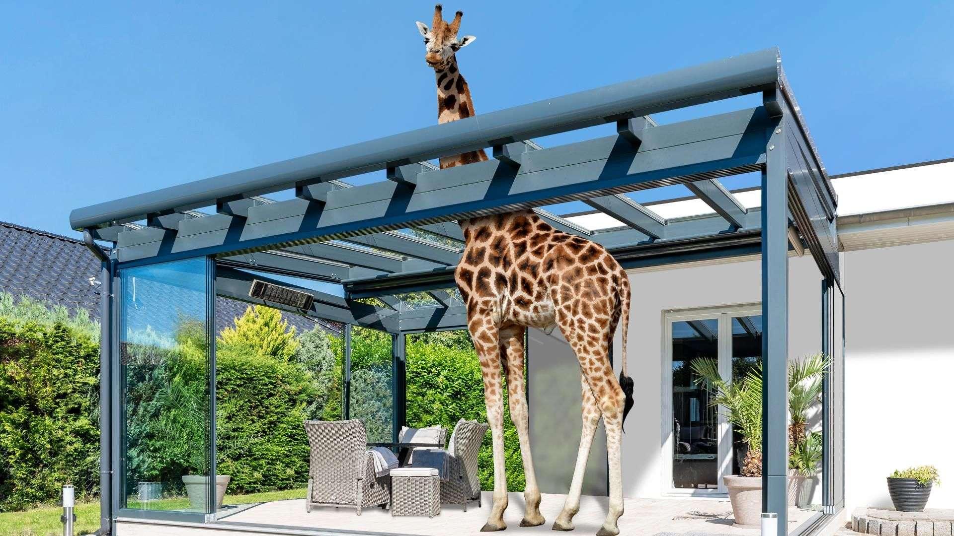 Terrassendach unter dem eine Giraffe steht, der Hals guckt durch das Schiebedach oben raus