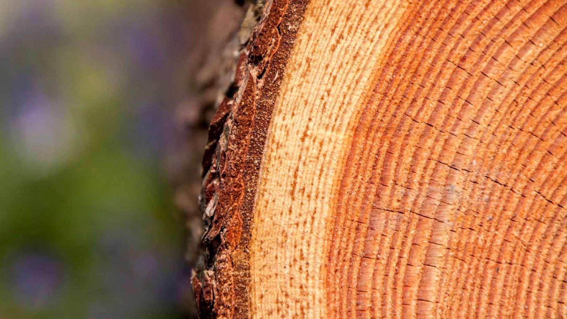 Nahansicht eines Baumstammes
