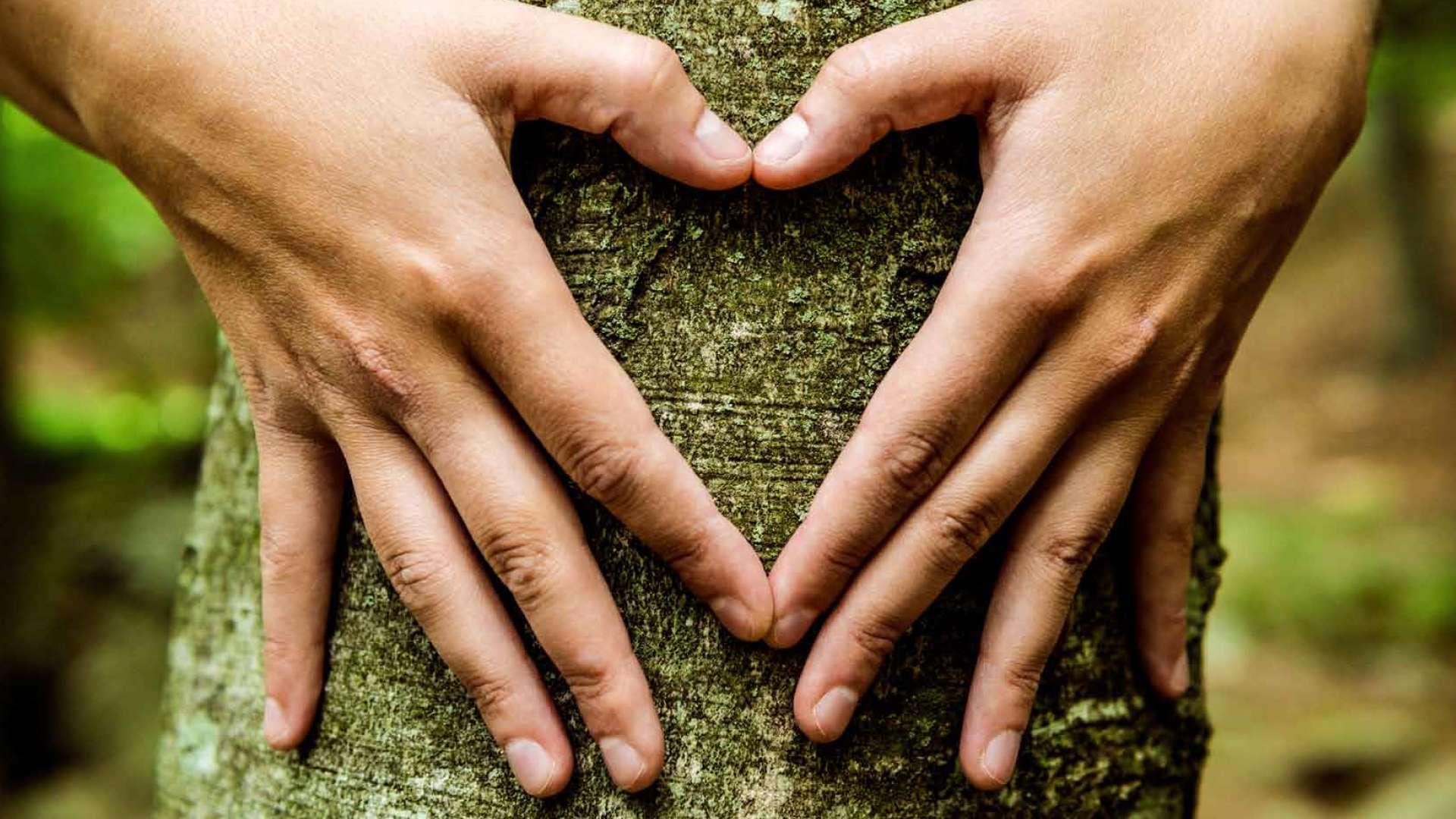 Zwei Hände, die vor einem Baumstamm ein Herz formen