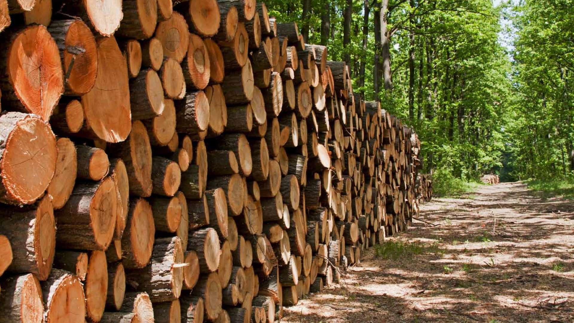 Waldweg mit vielen aufgestapelten Baumstämmen auf der einen Seite
