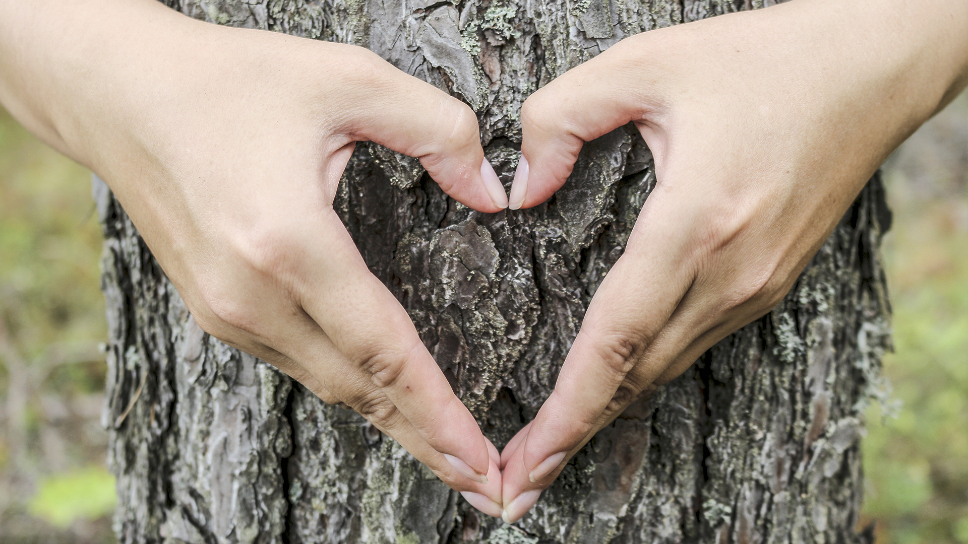 zwei Händer, die ein Herz vor einem Baum bilden