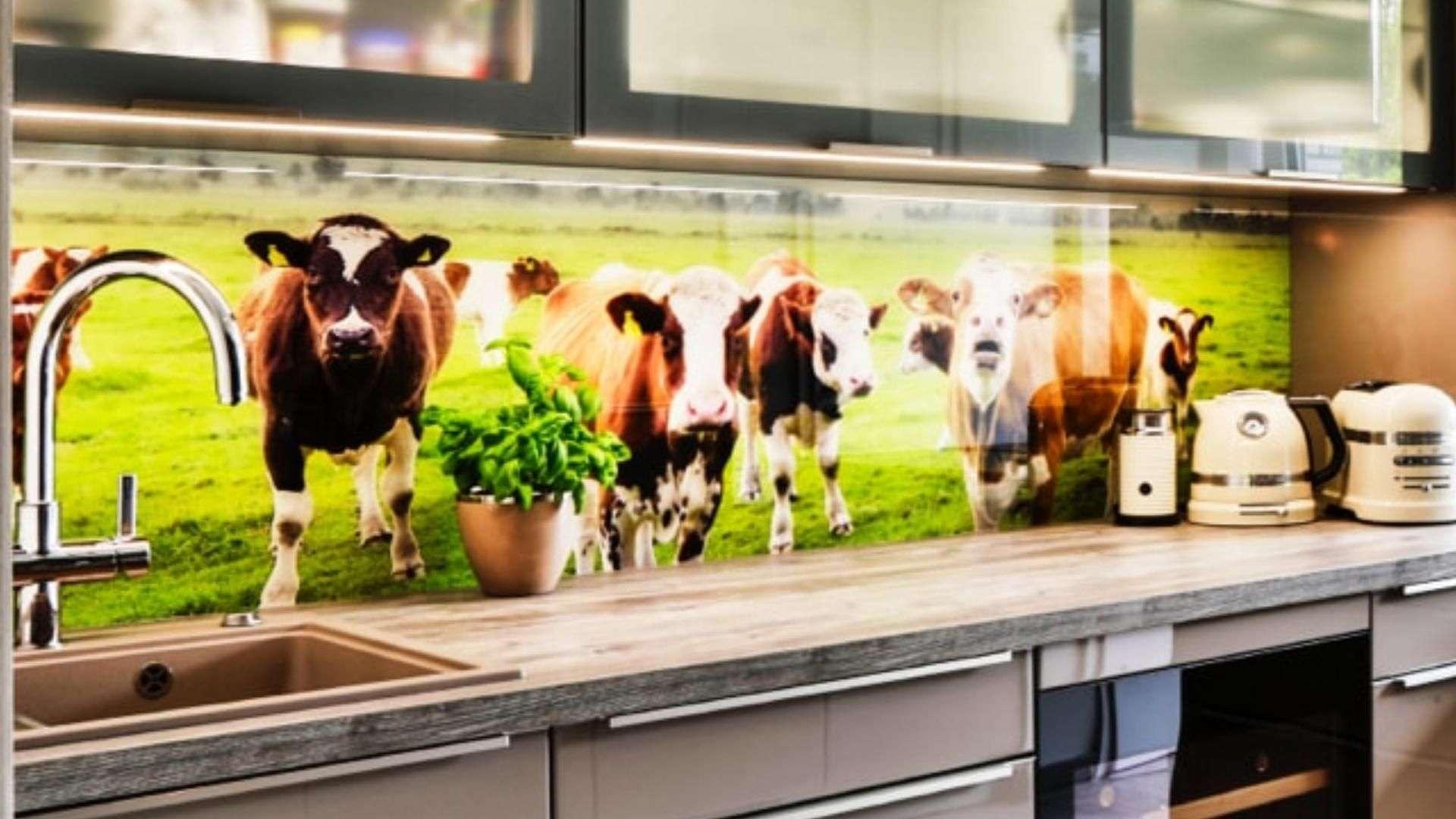 bedruckte Glasrückwand als Spritzschutz in einer Küche