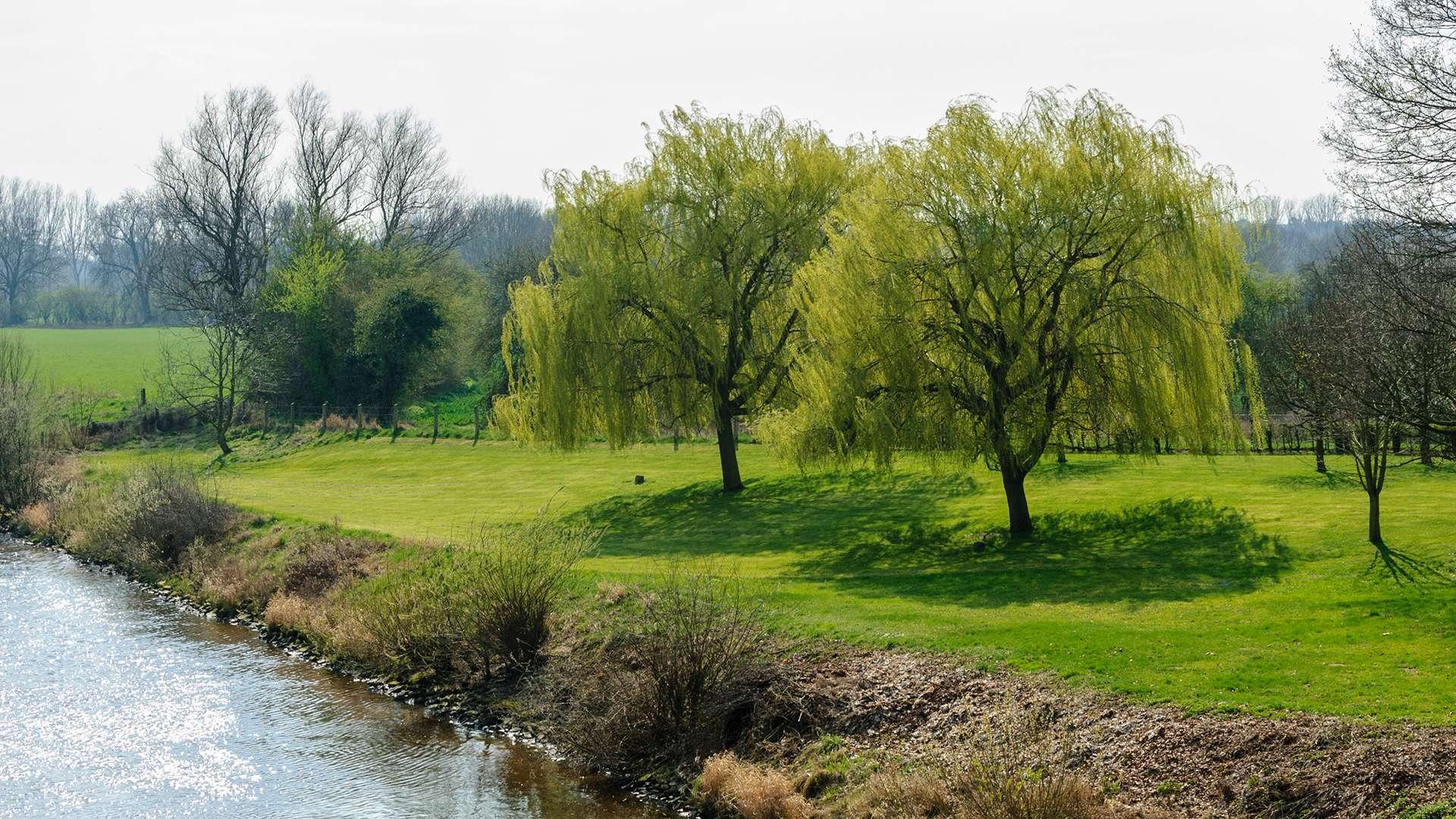 grünes Ufer der Weser in Nienburg